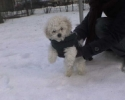 dami-snow.jpg