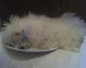 sakala-sleep-plate.jpg