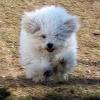 dami-ja-roope-koirasaari-121.jpg