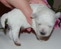 litter-g-11-days-old-11