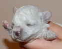 litter-g-11-days-old-5
