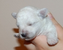 litter-g-11-days-old-6