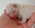 puppies-one-day-old-003.jpg