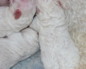 puppies-one-day-old-045.jpg