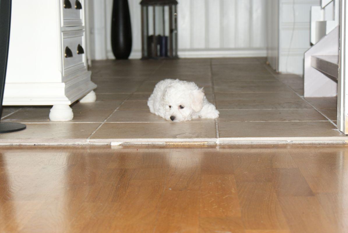 tired-puppy